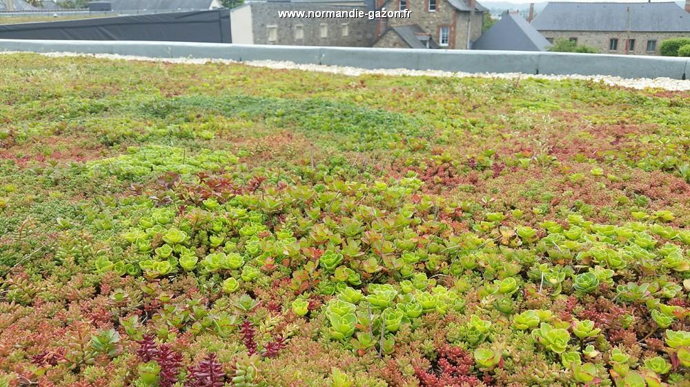 normandie sedum natte toiture vegetale extensive